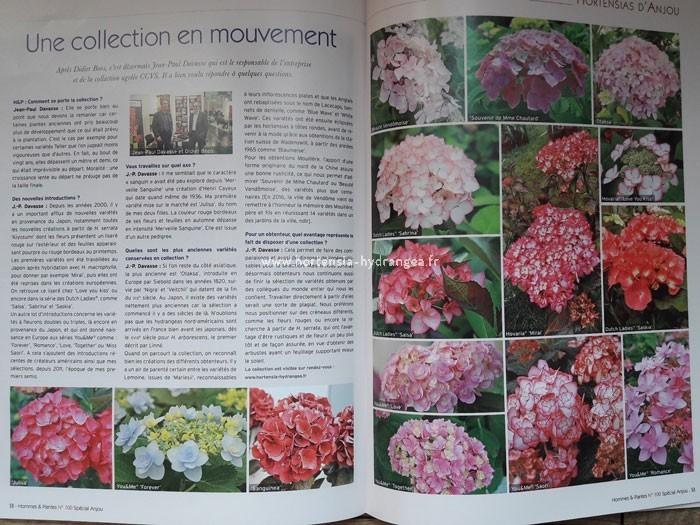 hortensia association plantes les principales plantes grimpantes du jardin fleur duhortensia. Black Bedroom Furniture Sets. Home Design Ideas