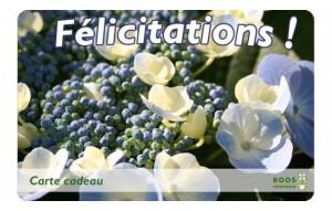 Félicitations (paniculata)